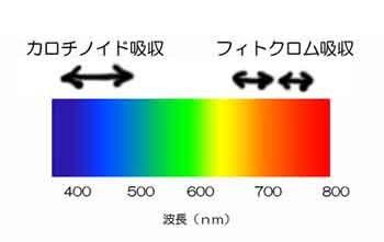 植物光吸収のコピー.jpg