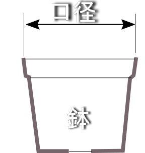 鉢3.jpg